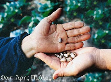 Δράστε για την Απελευθέρωση των Σπόρων