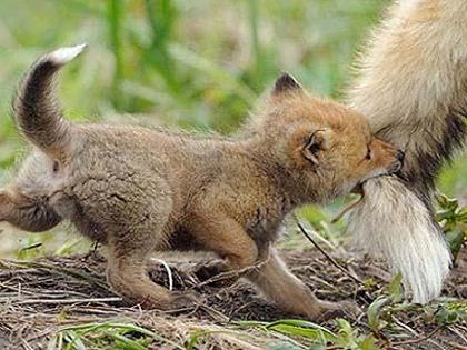 Δείτε τα πιο όμορφα μωρά