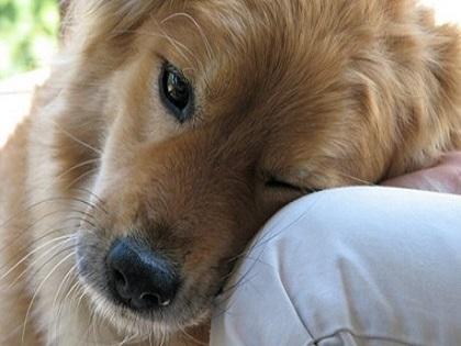 20 πράγματα που δεν πρέπει να ξεχνάμε όσοι αγαπάμε τα σκυλιά