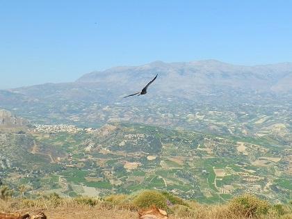 Απελευθερώνοντας την άγρια ζωή στην Κρήτη