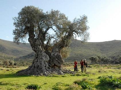 Τα Μονοπάτια Πολιτισμού της Αίγινας στο BLUE της Aegean Airlines